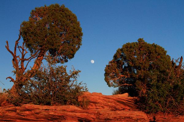 ballet de la lune au dessus du canyon