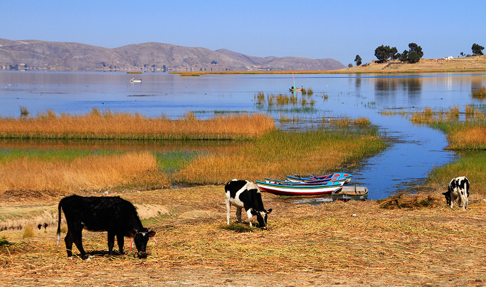 Quiet day on Lago Titicaca