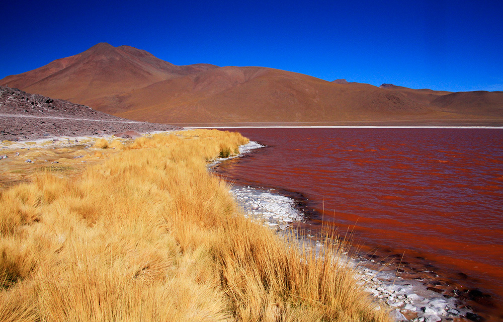 Laguna Colorada in South Lipez