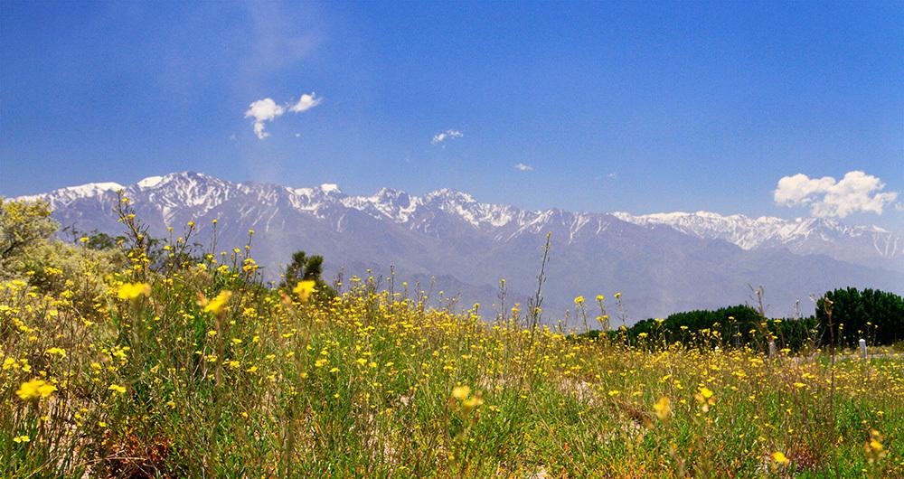 Pampa au pied des Andes