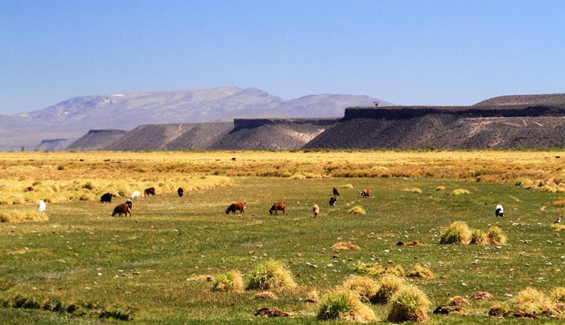 Pampa en Argentine