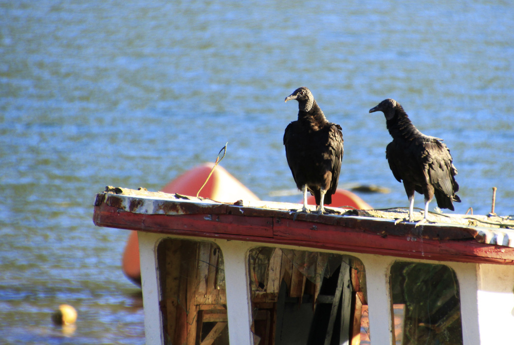 Two black birds on a boat