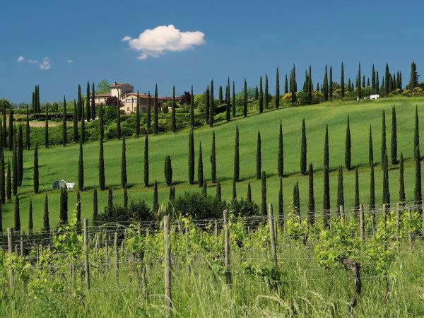 Campagne en Toscane
