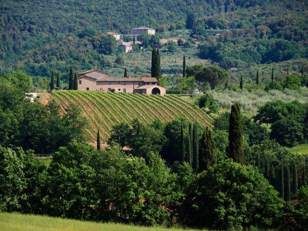 Paysage de Toscane en juin