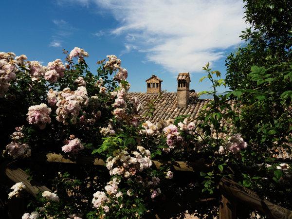 Cadre de fleurs pour toits ensoleillés