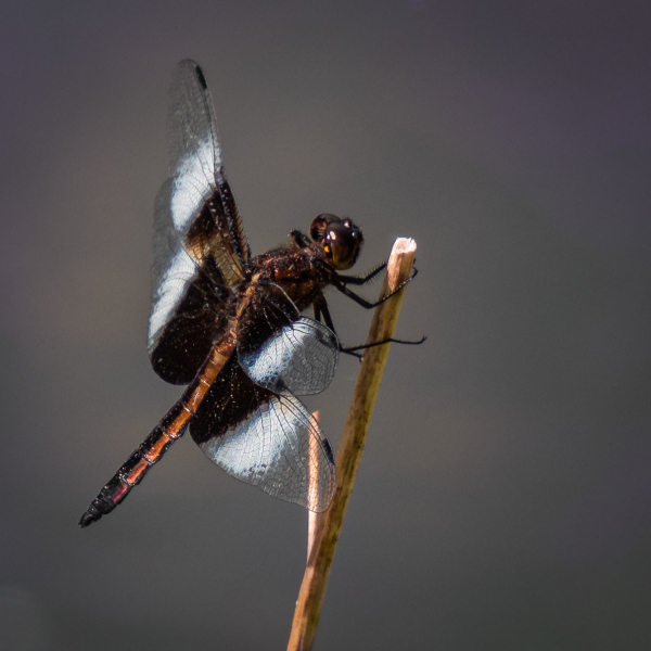 Un insecte accroché à un brin d'herbe