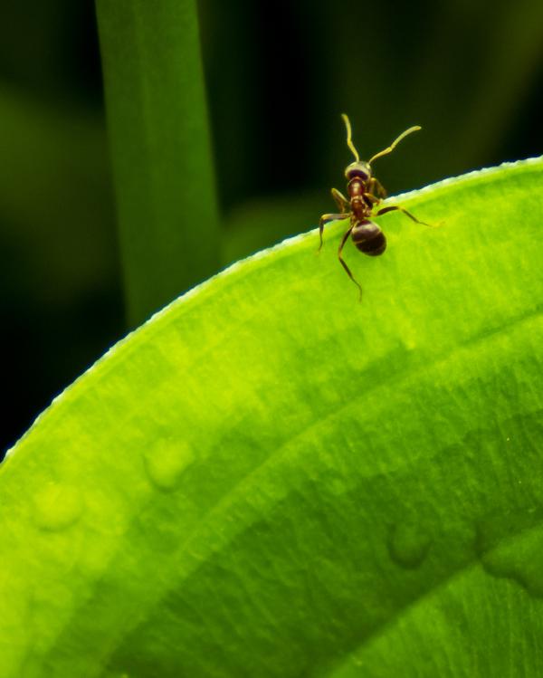 Une fourmi faisant de l'escalade
