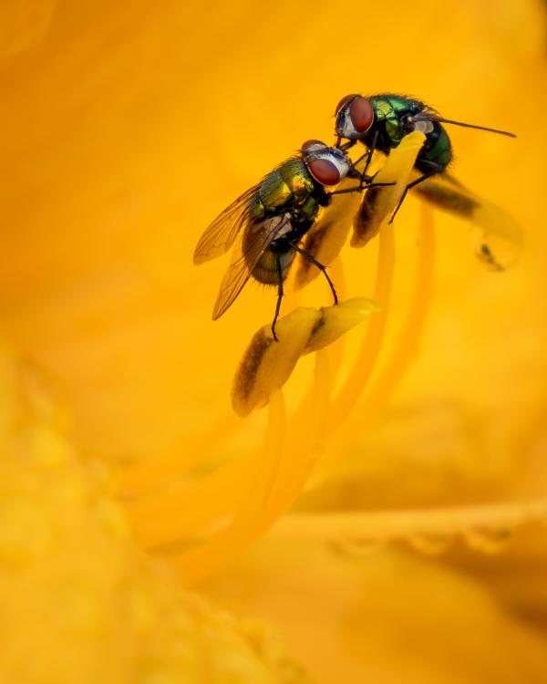 Deux mouches qui sympathisent