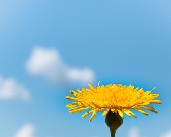 Une fleur timide...