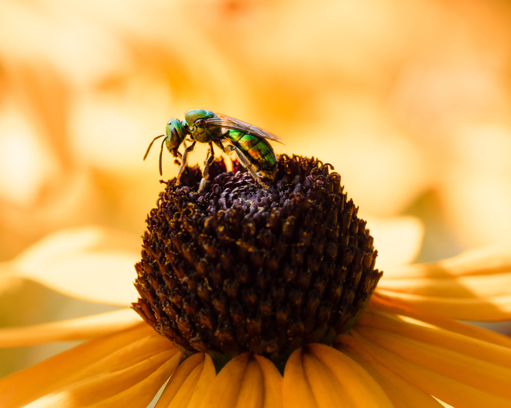 Insect on top of a flower