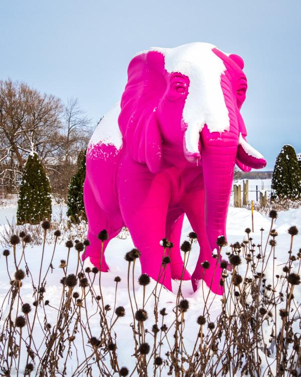 Éléphant rose