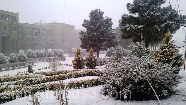 ببار ای برف سنگین بر مزارش