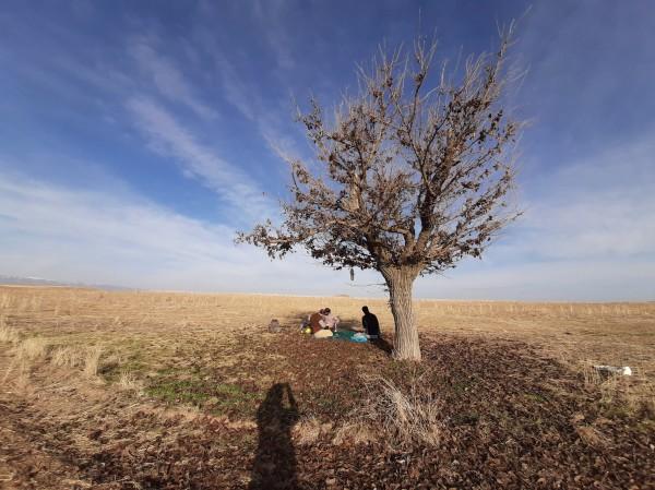 Kiarostami single tree - Mashhad