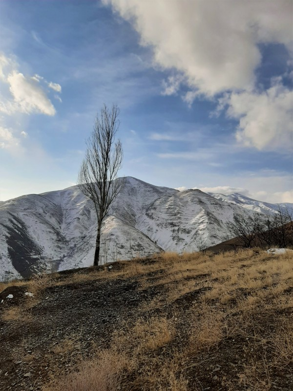 Single tree of Abbas Kiarostami - Zoshk peak
