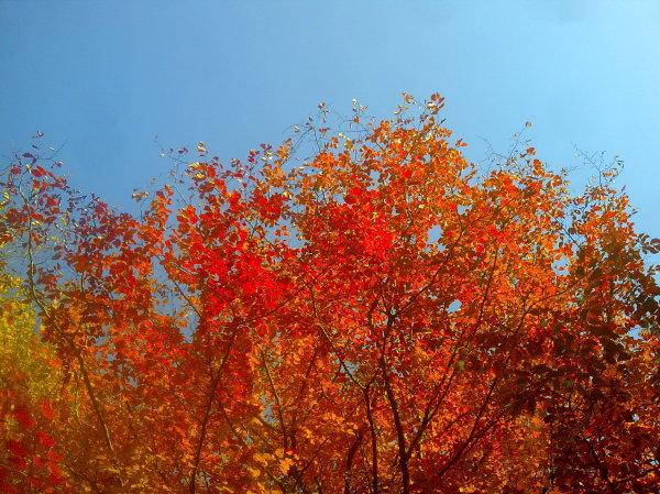 پاییز خوشگله