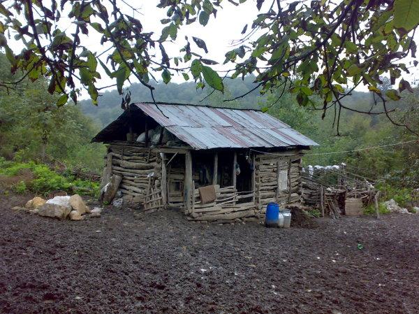 خونه جنگلی