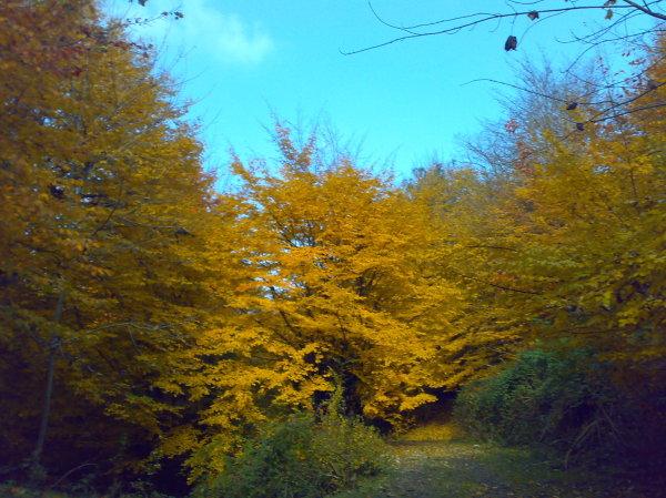 زرد پاییزی