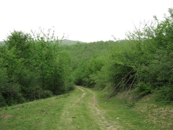 جاده سبزسبز
