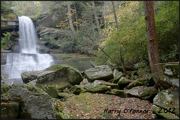 Maidenhair Falls II