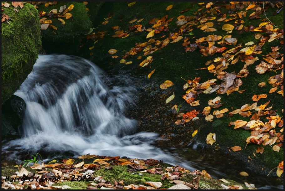 Flow and fallen leaves