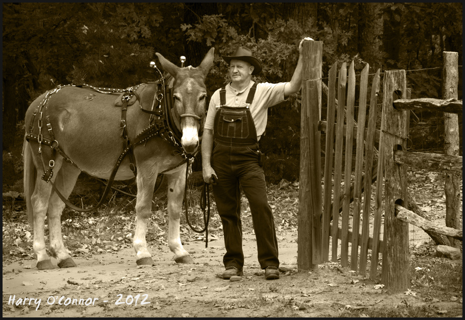 A man & his mule at Hart Square NC