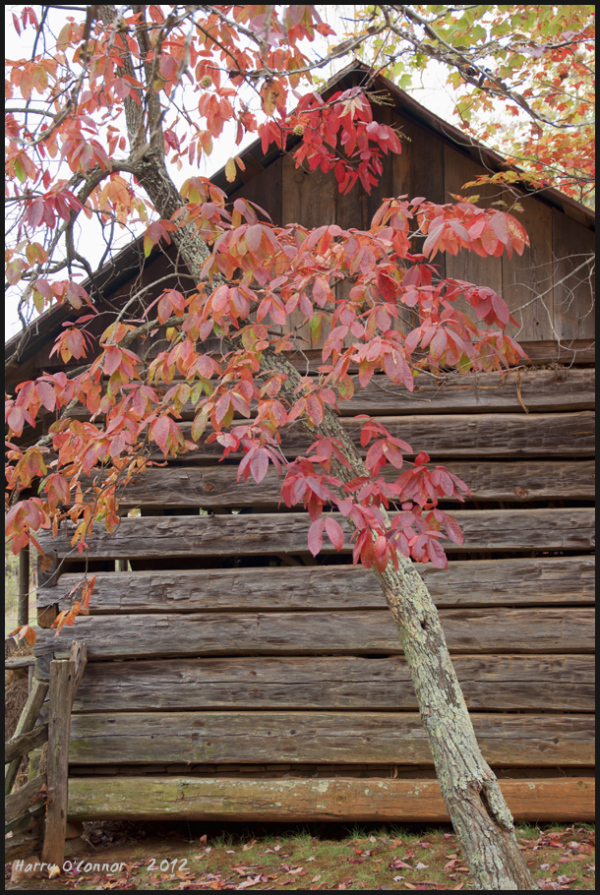Red leaves and shed