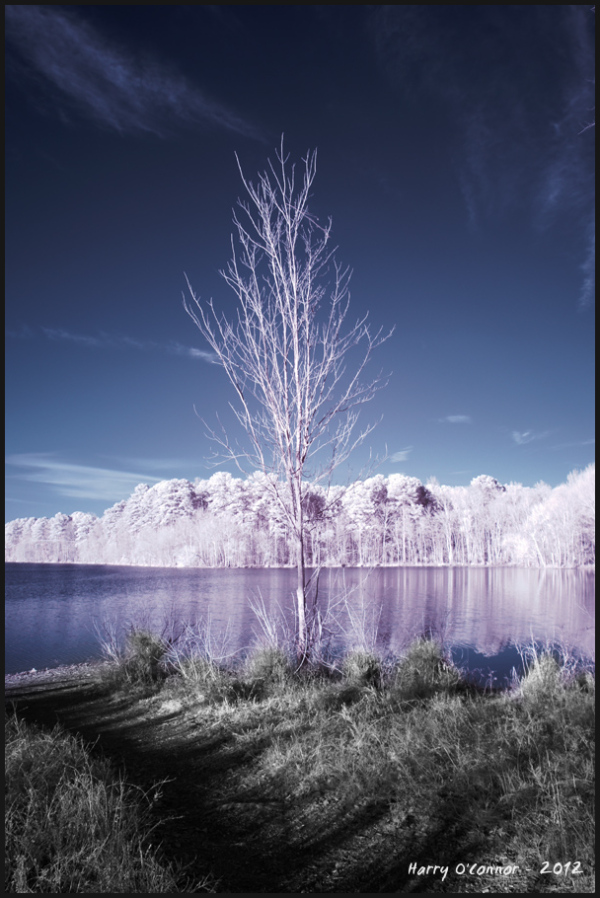 Bare tree at Bond Lake