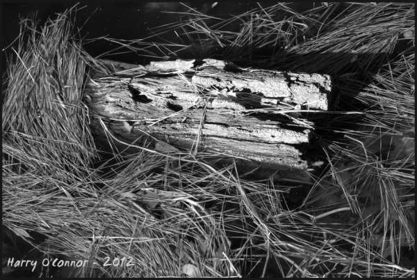 Driftwood and pine needles
