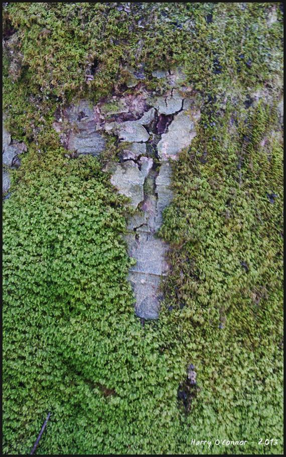 Mossy tree detail