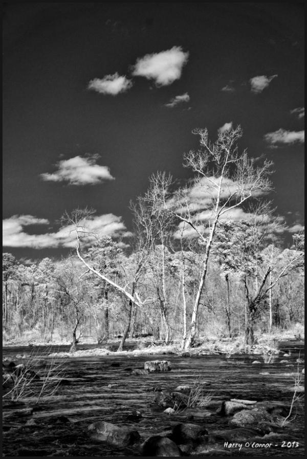 White trunk tree