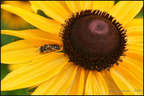 Departing bee