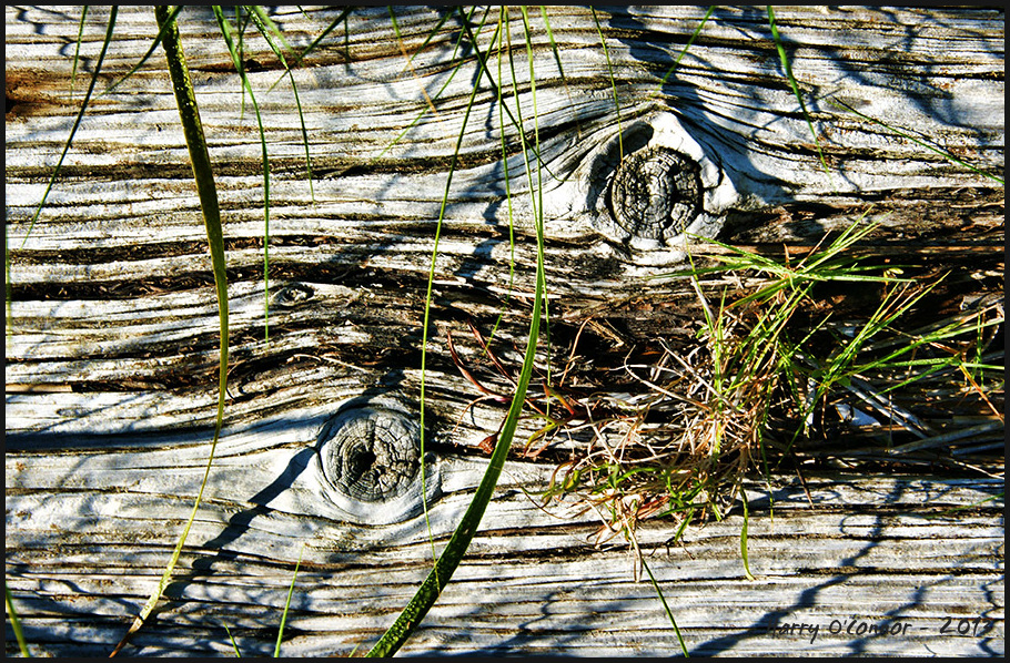 Knotholes and grasses