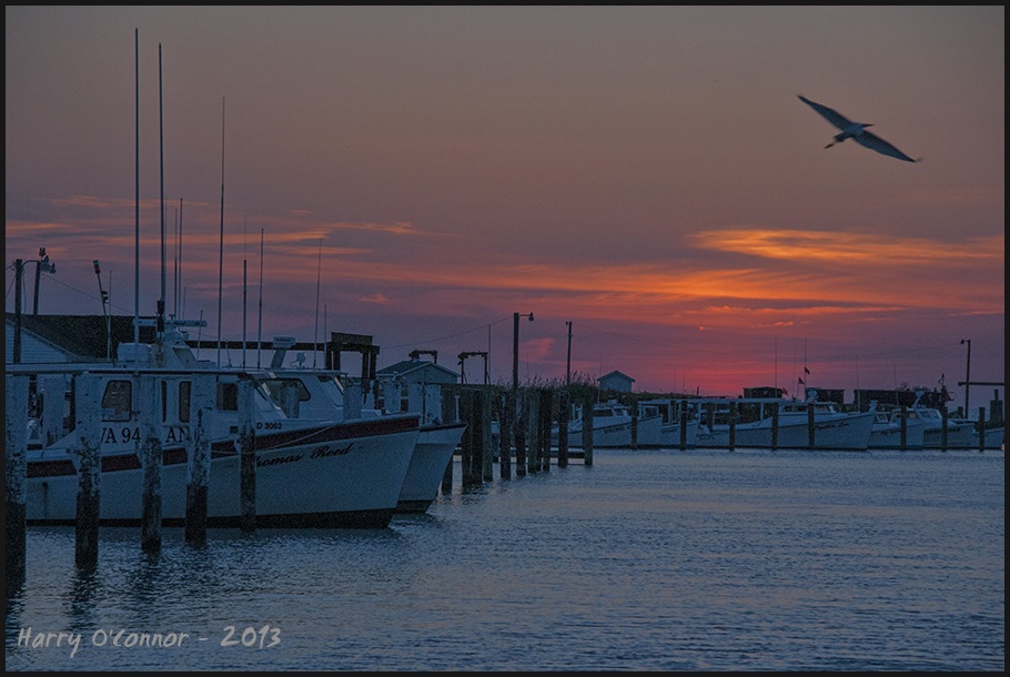Sunset with pelican tangier