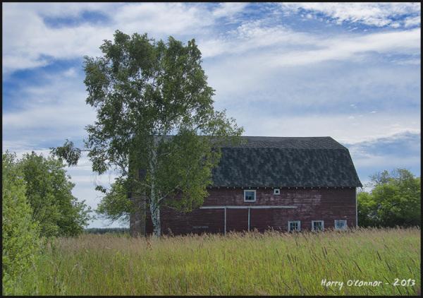 Barn in high grass