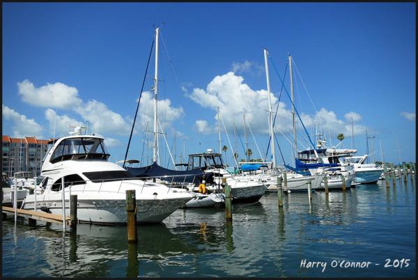 Dunedin Marina