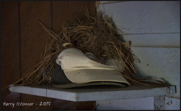 Bird's nest cap