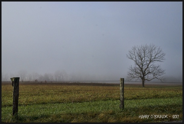 Lone tree in fog with fence