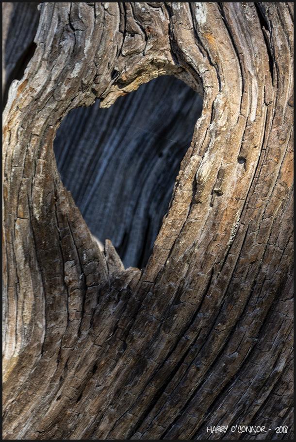 Heart shaped knothole