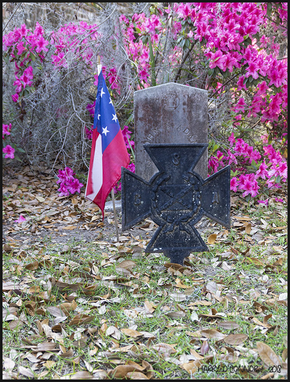 Confederate grave and azaleas
