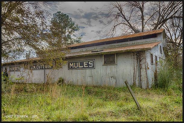 Horses - Mules