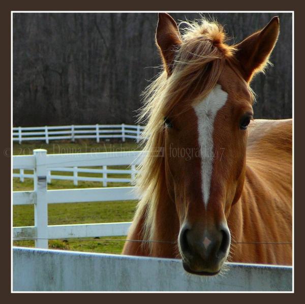 Bold equine portrait.