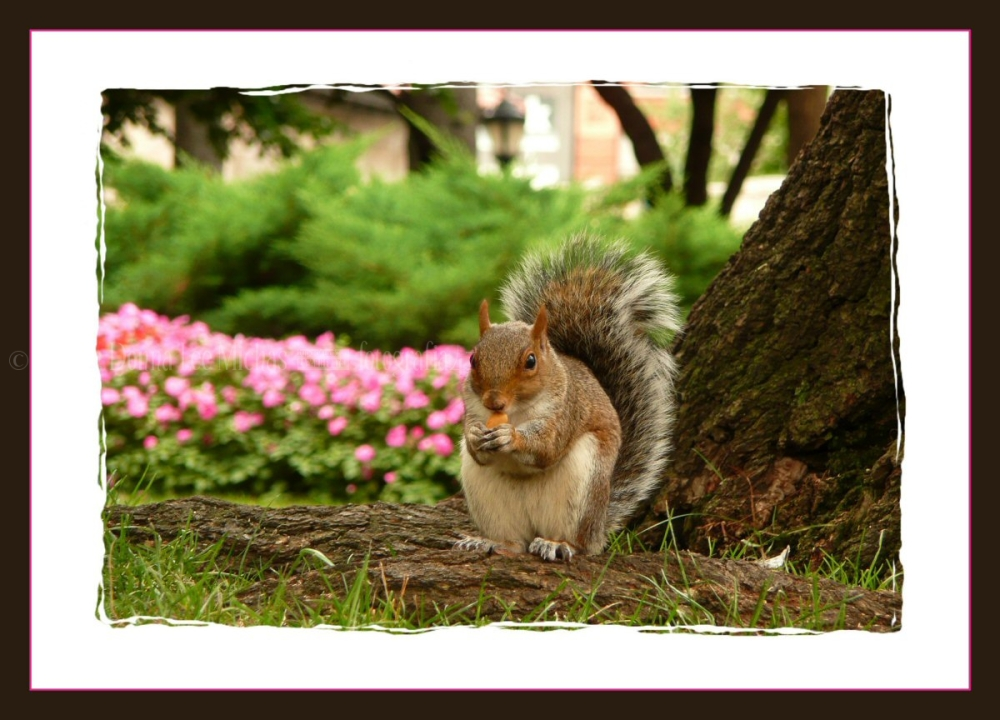 Squirrel eating a nut, against pink and green back