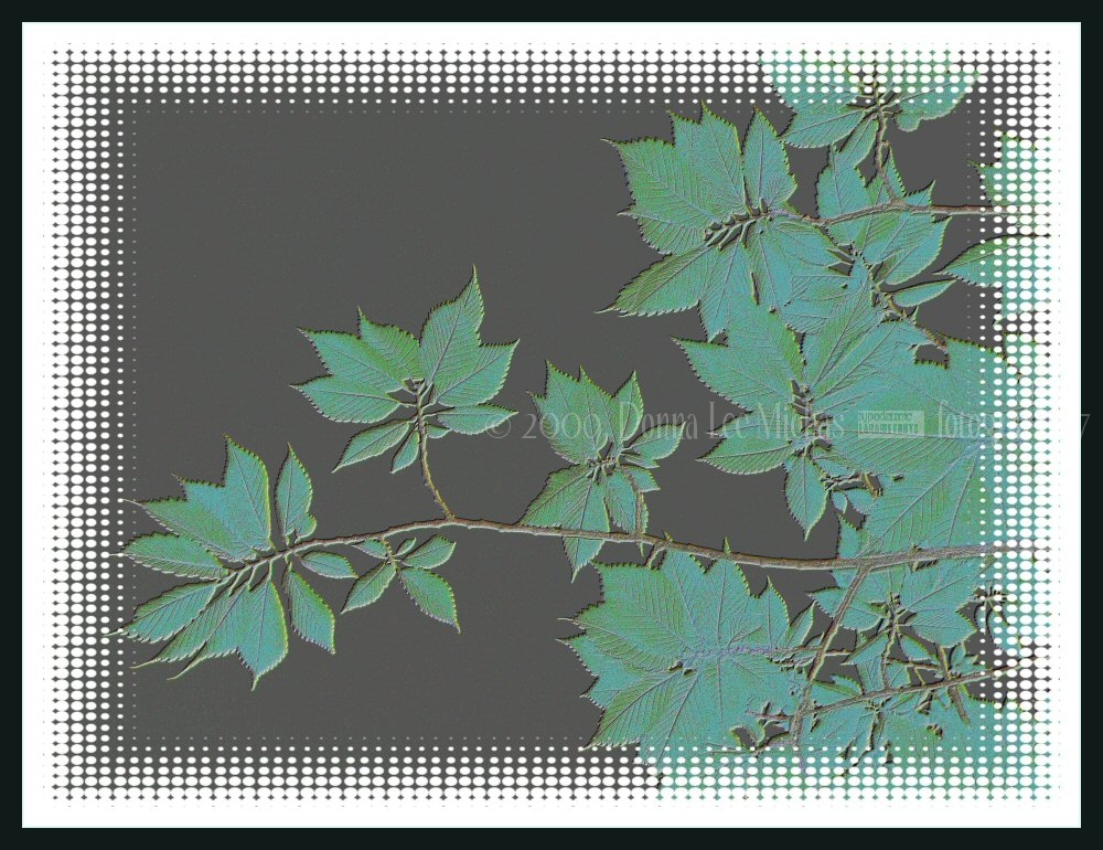 Artful, post-processed silhouette of leaves.