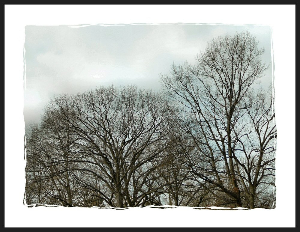 Ephemeral shot of graceful, but bare winter trees.
