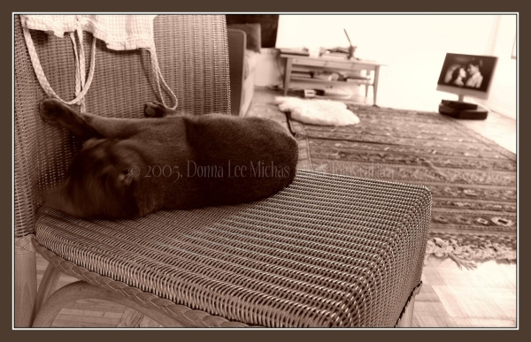Sepia of cat in chair with a film noir on TCM®.