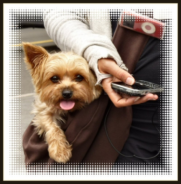 A woman with her dog, Blackberry and iPod.
