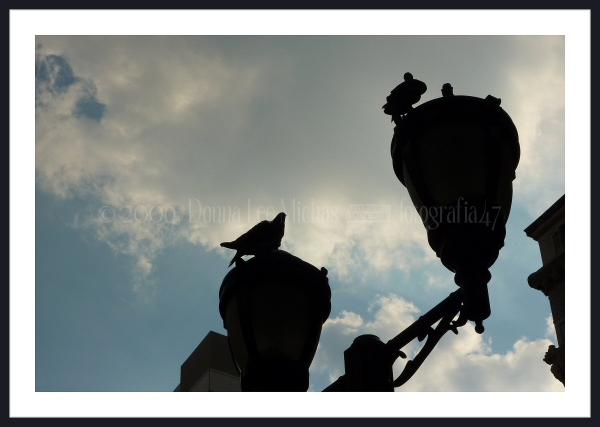 Two pigeons enjoying their view atop a lampost.