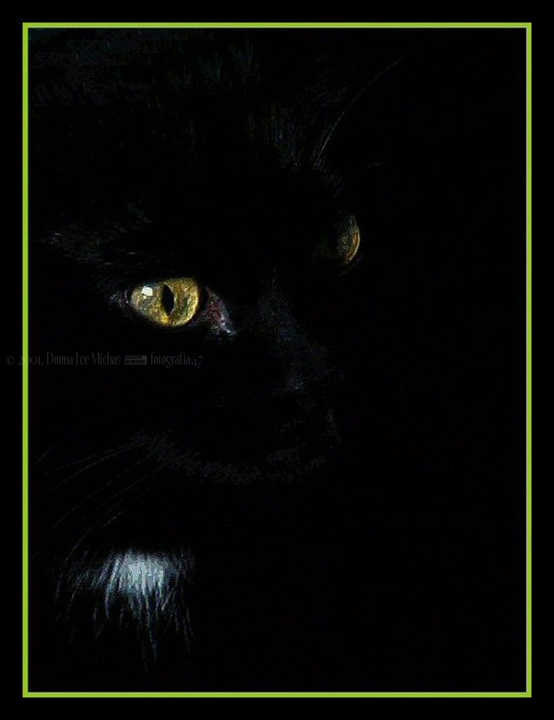 Portrait of my baby of 21 years, lost on 2/7/2013.