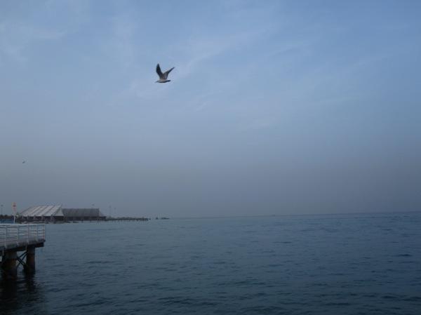 Jonathan...Seagull...