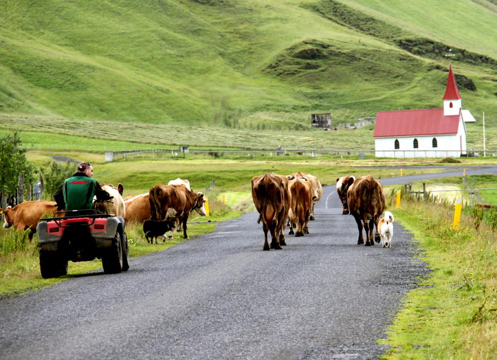 Agriculteur en Islande...